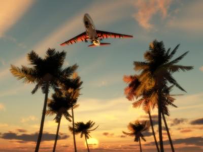Flugzeug-Palmen